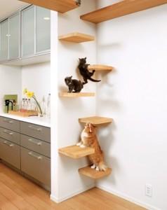 diseño-creativo-para-gatos2